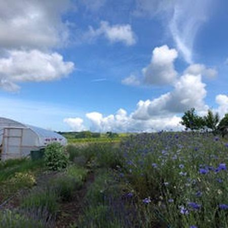 The field where Botanika harvests its pesticide-free flowers Photo: Botanika
