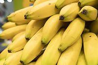 ARCHIV - Zum Themendienst-Bericht von Ricarda Dieckmann vom 23. September 2020: So schön sehen Bananen nicht lange aus. Sind sie erst einmal braun gesprenkelt, werden sie meist verschmäht. Doch gerade aus den überreifen Früchten lassen sich kreative Gerichte zaubern. Foto: Robert Günther/dpa-tmn - Honorarfrei nur für Bezieher des dpa-Themendienstes +++ dpa-Themendienst +++