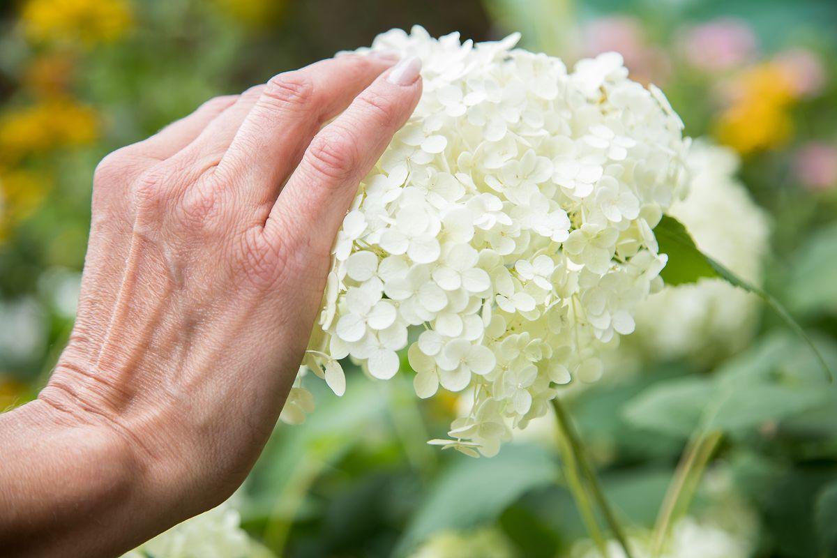 Im Sinnesgarten dürfenPflanzen berührt werden.