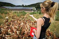 Bio Landwirtschaft - Hühner - Foto: Pierre Matgé/Luxemburger Wort