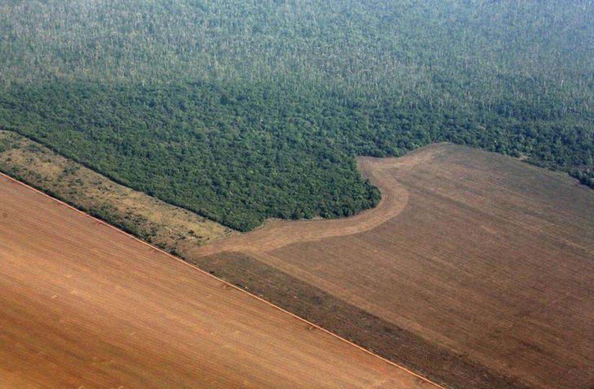Corte de árvores na Amazónia.