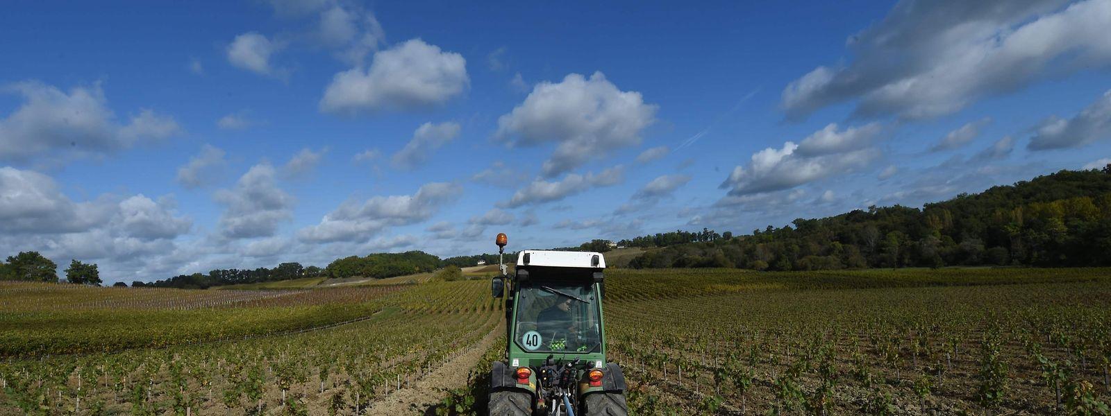 Er hat bereits auf Glyphosat verzichtet: Ein Bauer in Frankreich bewirtschaftet das Feld mechanisch.