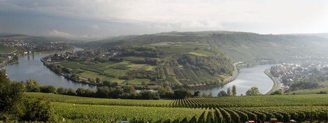 Die Moselregion mit ihren Weinbergen und Wanderwegen ist ein beliebtes Ausflugsziel.