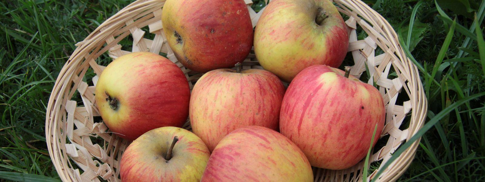 Die nationale Produktion reicht nicht aus, um die Nachfrage an Äpfeln zu erfüllen.