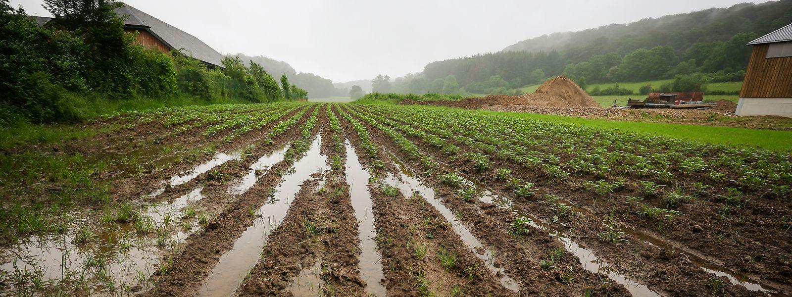 Für Déi Lénk müssen in der Klima- und Sozialpolitik neue Wege eingeschlagen werden. Unter anderem fordern sie eine faire Biolandwirtschaft.