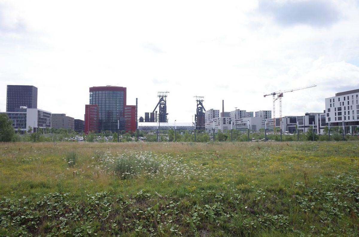 Hier sollen die drei Gebäude errichtet werden.