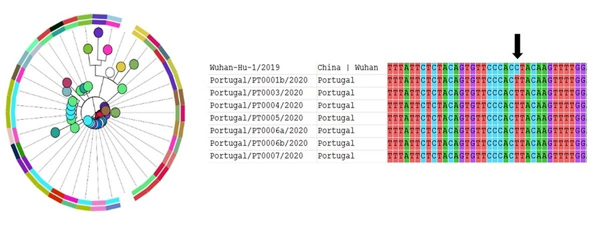 Gráfico da plataforma bioinformática do INSA que sequencia o genoma do novo coronavírus.