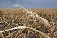 A seca nos últimos meses está a condicionar o resultado das culturas no Luxemburgo.