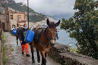 Der kommunale Desinfektions-Trupp im Einsatz in Amalfi: Die Gassen des Ortes sind oft derart steil und eng, dass auf die Transportdienste von Maultieren zurückgegriffen werden muss.
