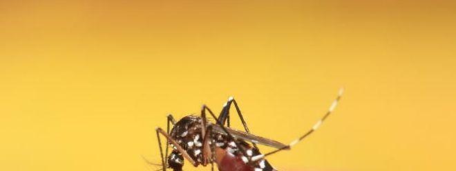 Moskitos sind für die Übertragung des Zika-Virus verantwortlich.