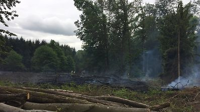 Rund 30 Ar Wald brannten am Freitag.