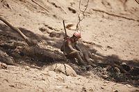 Nach dem Dammbruch Ende Januar war eine Schlammlawine über Teile der Anlage und benachbarte Siedlungen nahe der Ortschaft Brumadinho im Bundesstaat Minas Gerais hinweggerollt und hatte Menschen, Häuser und Tiere unter sich begraben.