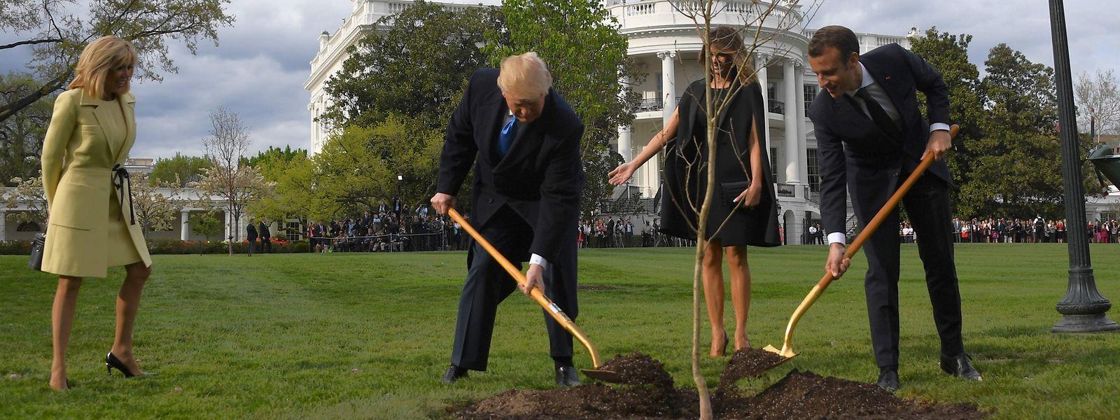 Die beiden Präsidenten pflanzten als Auftakt des Besuchs eine Steineiche im Garten des Weißen Hauses.