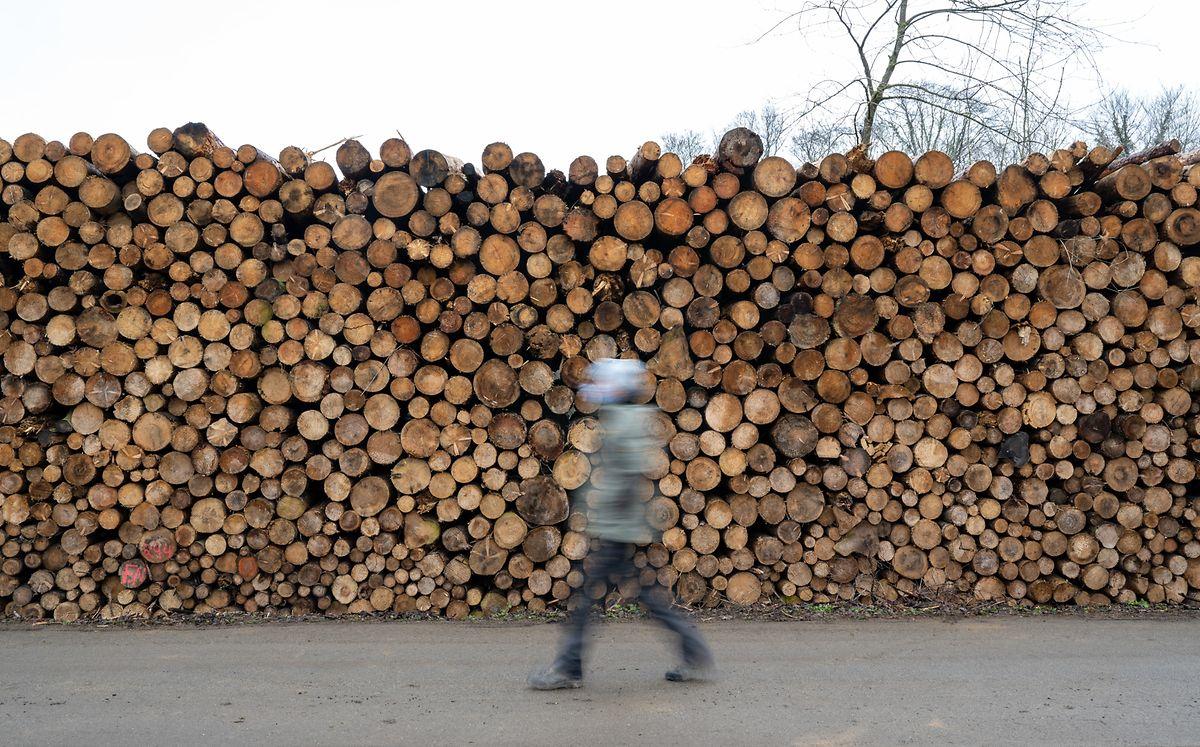 Durch das Massensterben der Fichten ist auch der Holzpreis stark gesunken.