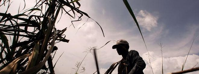 Haiti will seine Landwirtschaft stärken, um die Abhängigkeit vom Ausland zu reduzieren.