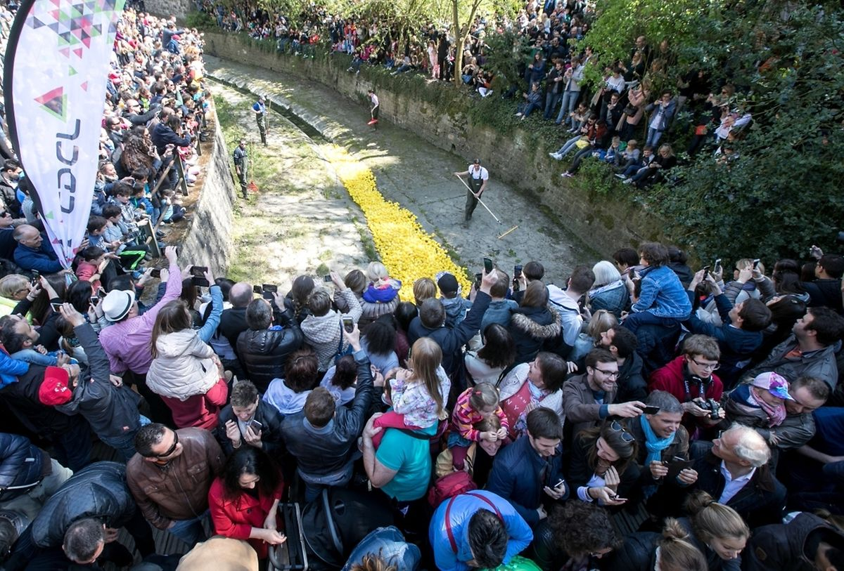 Last year, a record 16,000 ducks poured down the River Alzette (photo: Luxemburger Wort)