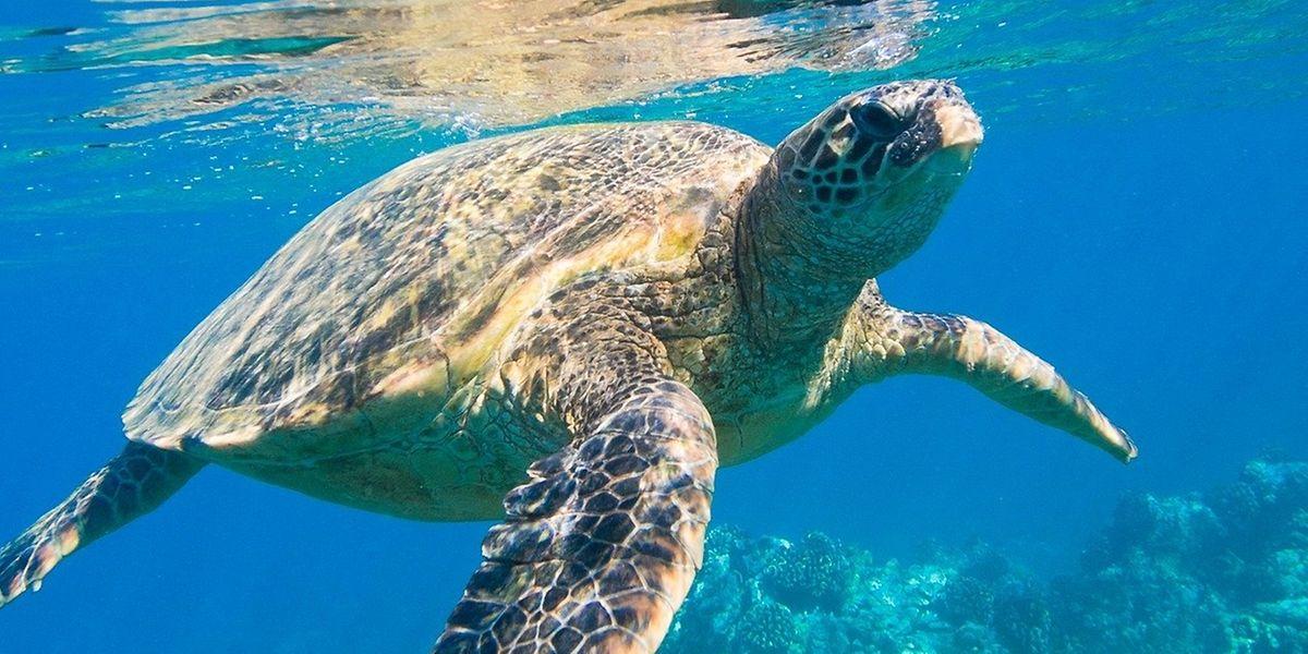 In den Meeren droht infolge der Erwärmung Sauerstoffarmut, Schäden für Fische und andere Lebewesen.