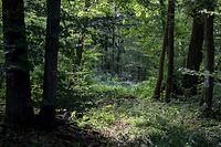 Lok , Wie geht es dem Wald in Luxemburg , Stand der Dinge , Borkenkäfer usw , Foto: Guy Jallay/Luxemburger Wort