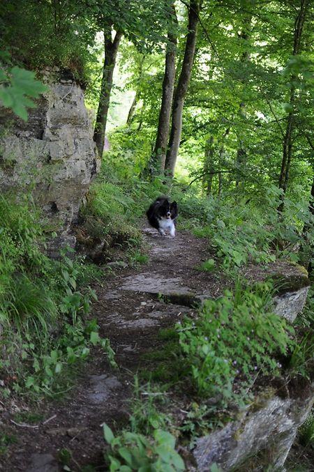 Das geologische Erbe und die bizarren Felsformationen zeichnen das Müllerthal aus.