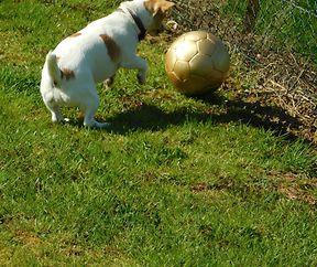 Emmer um Ball