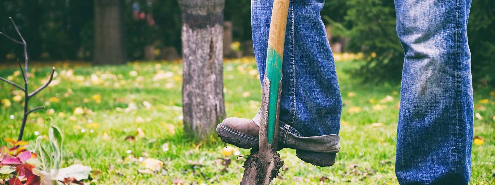 In schwierigen Zeiten wie diesen ist Gartenarbeit eine gute Möglichkeit, sich zu Hause zu beschäftigen – dies umso mehr, da saisonbedingt gerade im März zahlreiche Aufgaben anfallen.