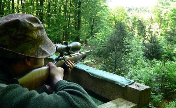 Petition Nummer 697 verlangt ein Verbot der Jagd innerhalb von Wohngebieten.