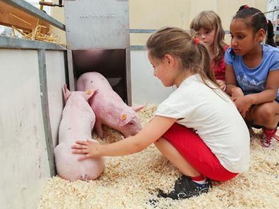 """Sowohl die Kinderrechte als auch der Tierschutz sollen künftig als """"Staatsziele"""" in die neue Verfassung geschrieben werden."""