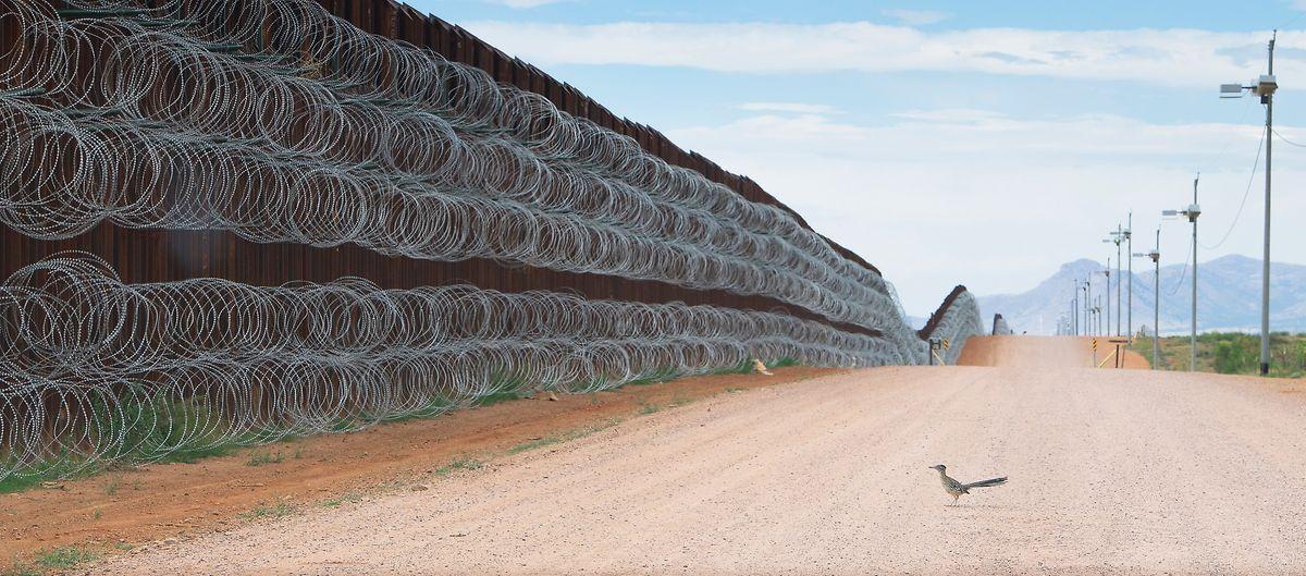 Alejandro Prieto (indépendant): «Roadrunner Approaching the Border Wall».