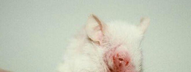 Mit diesem Bild wird auf die Tierversuche aufmerksam gemacht.