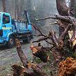 O Furacão Leslie provocou até ao momento a queda 120 árvores nos distritos de Setúbal, Lisboa e Leiria, os mais afetados até às 22:30.