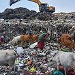Indien, Guwahati: Menschen sammeln verwertbaren Müll auf einer Halde nahe des Naturschutzgebietes Deepor Beel auf.