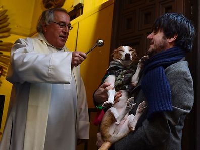(FILES) This file photo taken on January 17, 2015 shows a dog blessed by a priest at San Anton church in Madrid marking San Anton Abad's Day (Saint Anthony), on January 17, 2015. Dogs, cats, rabbits and even turtles, many dressed in their finest, trooped into churches across Spain in search of blessing on the patron saint of animals Saint Anthony's Day. Dozens of dogs with their masters to receive a blessing were the stars of January 15, 2017 mass in the church of San Anton (St. Anthony) in Madrid, for the feasts of the patron saint of domestic animals. / AFP PHOTO / PIERRE-PHILIPPE MARCOU