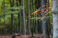 Lokales, Illustration, Natur, Wald, Herbst, Herbstwetter, Wetter, Pilze, Baum, Bäume, Blatt, Blätter, Weg, Depression, Gemüt, Foto: Anouk Antony/Luxemburger Wort