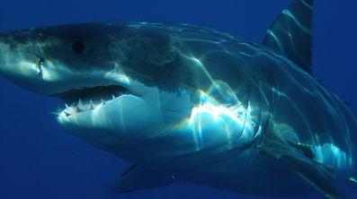 Die beiden Haie wurde in der Nähe zweier stark besuchter Strände gesichtet.