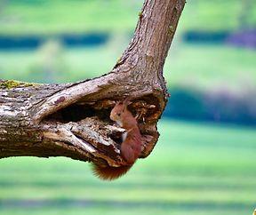 Oh eine  Baumhöhle