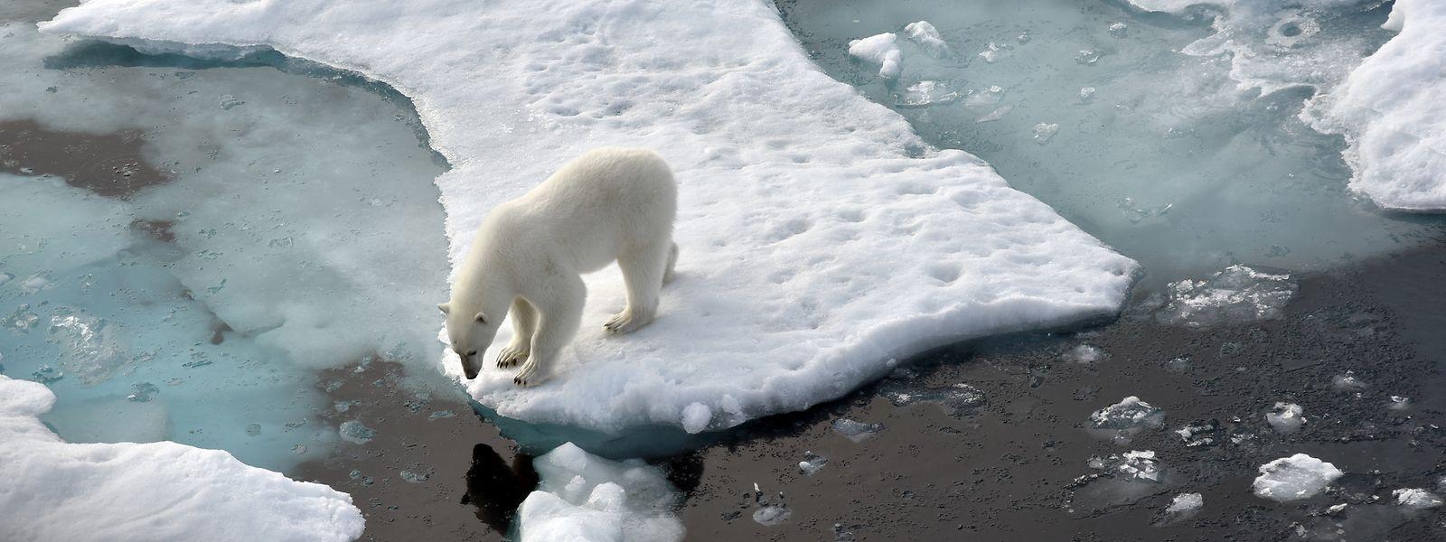 Damit es dem Eisbär auch morgen noch gut geht, muss auch Luxemburg seine Klimaaufgaben erledigen.
