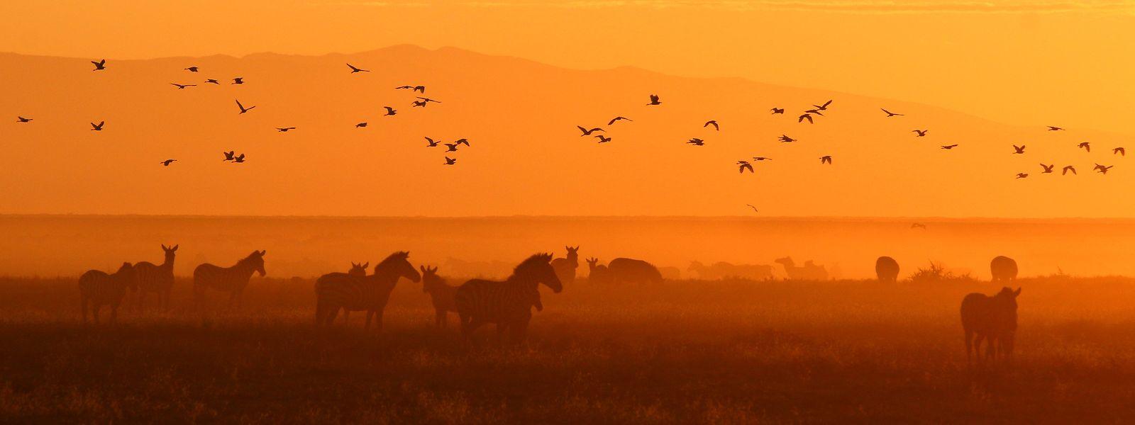 Beeindruckendes Farbenspiel: Morgenröte über der Serengeti (Tansania).