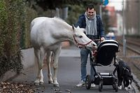 "Horse ""Jenny"" inspects the baby of Raphael W�llstein as he pushes the pram through the Fechenheim district of Frankfurt am Main, western Germany, on March 8, 2019. - Arab mare ""Jenny"" is allowed to decide herself where she wants to spend her time, as her owner opens the stable door every day for his 22-years old horse. ""Jenny"" has fixed a sing on her holster, reading ""My name is Jenny. I've not escaped, just taking a stroll"". (Photo by Boris Roessler / dpa / AFP) / Germany OUT"