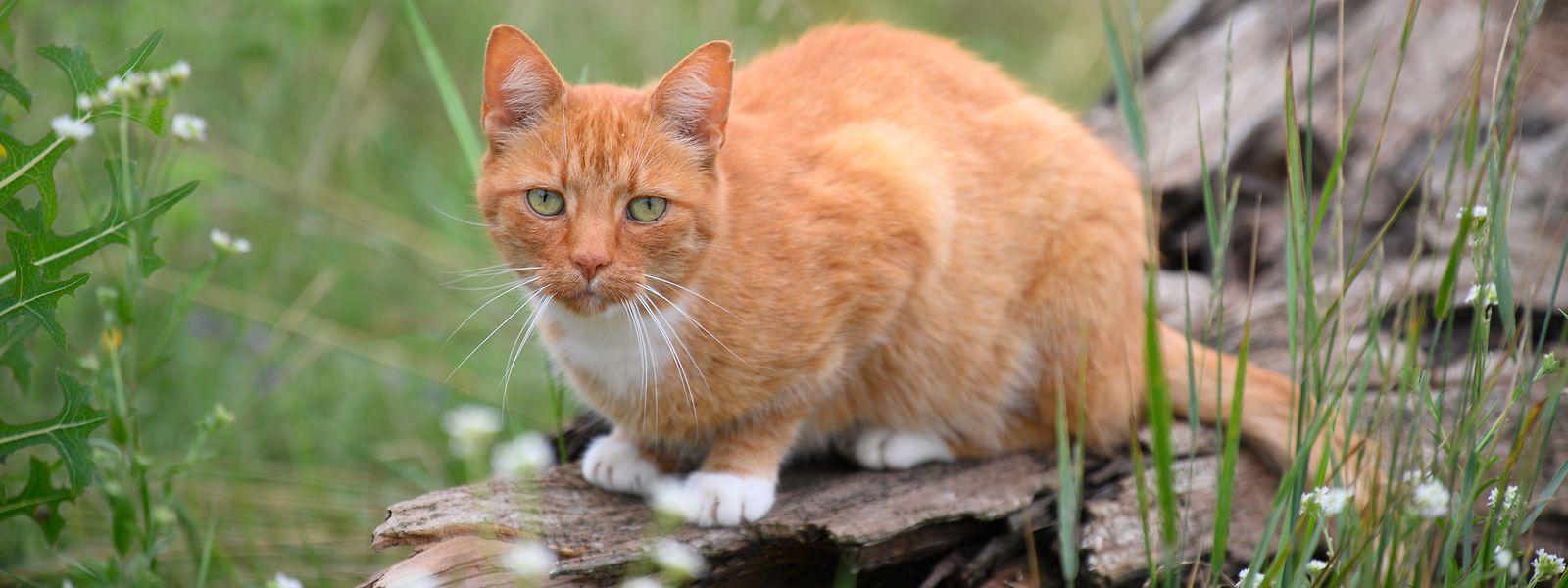 """Ein 54-jähriger muss fünf Jahre hinter Gitter wegen """"krimineller Sachbeschädigung"""". Unter diesen Straftatbestand fallen auch Morde an Haustieren - im konkreten Fall neun Katzen."""