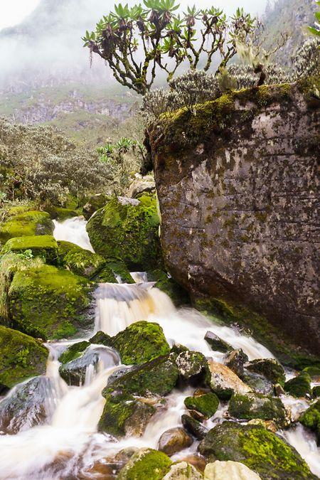 Wilder Bach entlang des Weges zum Bugata Camp – neblig und verwunschen sieht die Natur im Ruwenzori aus.