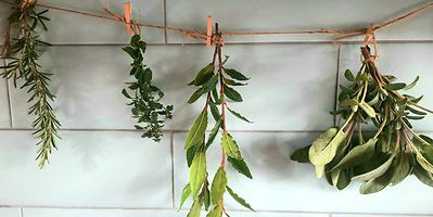 Rosemary, thyme, laure or bay and sage hung out for drying