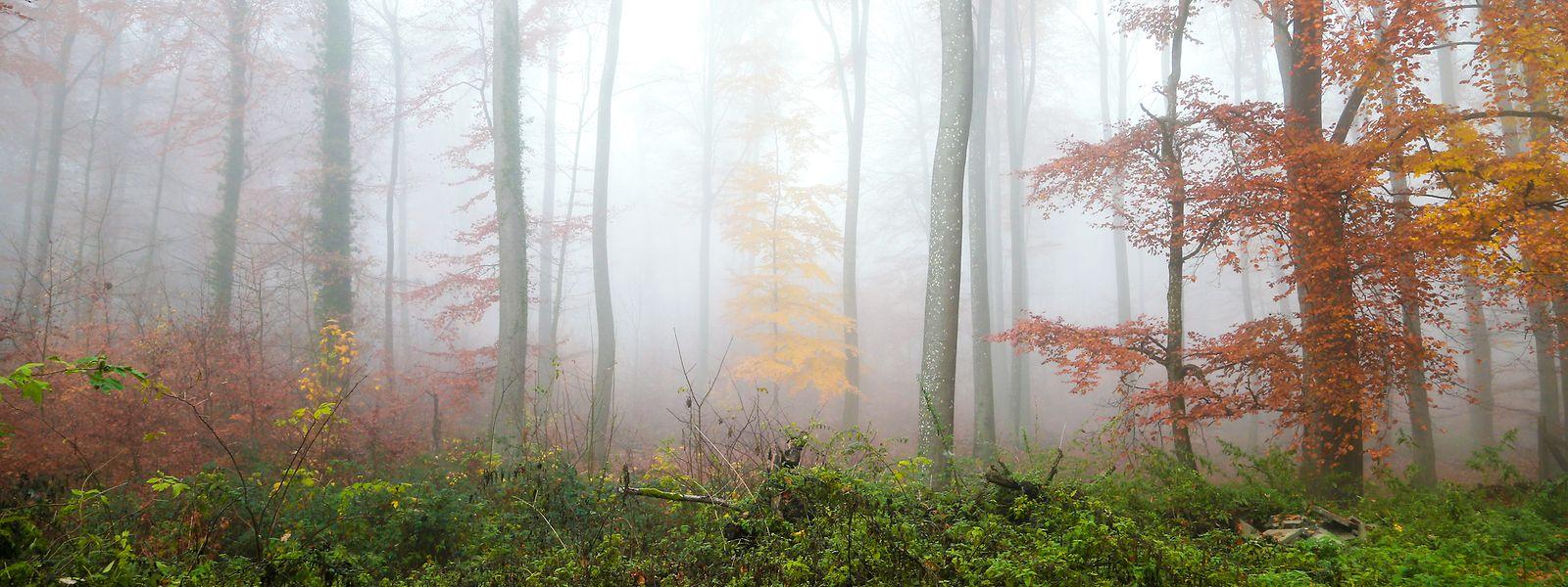 Grau in Grau präsentierte sich der Großteil des herbstlichen Wettergeschehens.