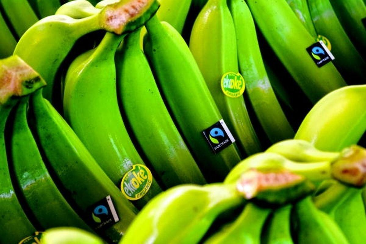 "Bereits Standard hierzulande: ""Fairtrade""-Bananen."