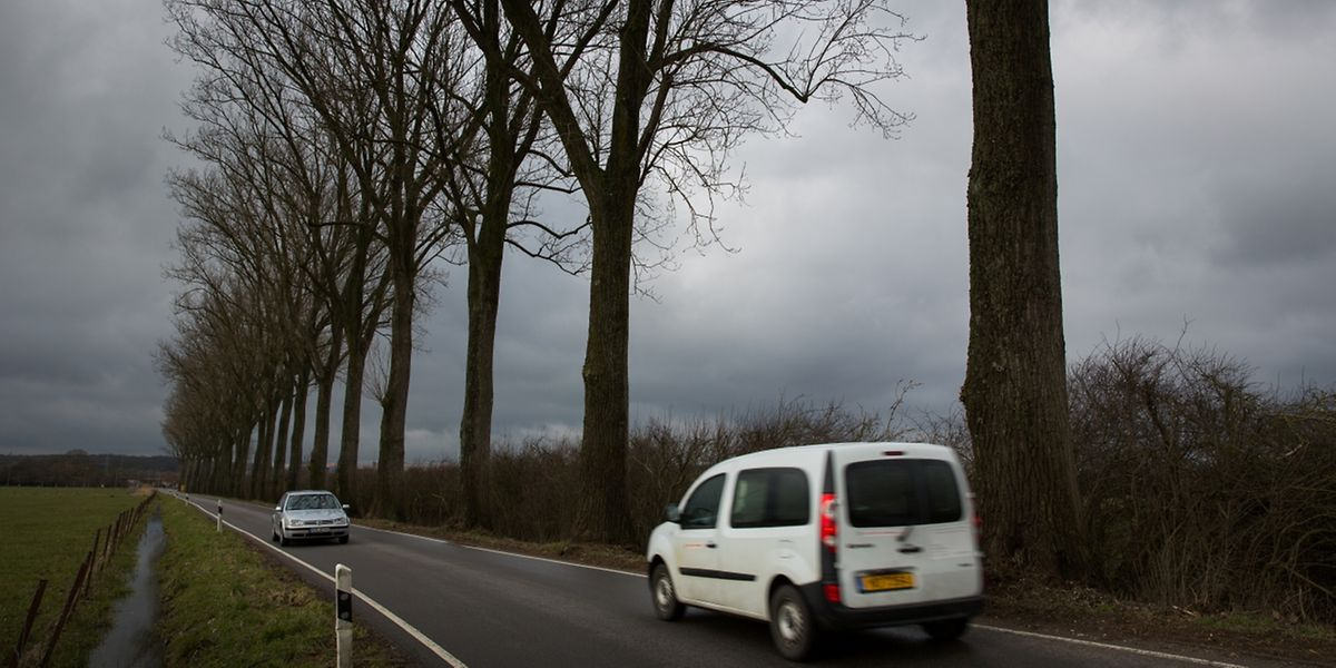2016 gab es bereits drei Verkehrstote bei Kollisionen mit Bäumen.