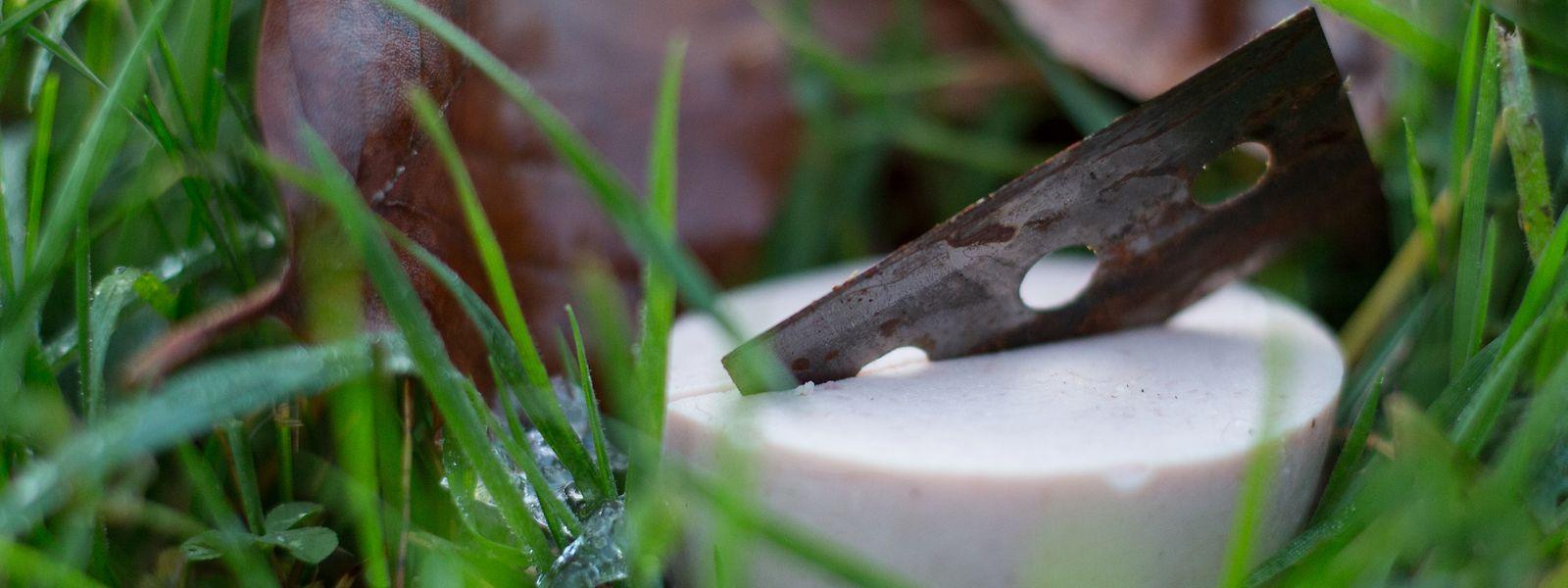 Ein mit einer Rasierklinge präpariertes Stück Fleischwurst liegt für Übungszwecke bei derAusbildung eines Giftköder-Suchhundes in einem Garten.