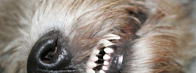 Wegen schwerer Misshandlung eines Hundes stehen zwei Landwirte aus Aspelt vor Gericht.