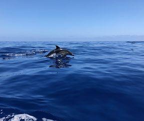 Akrobaten der Meere