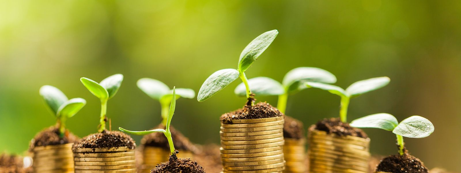 Im Jahr 2019 investierte der Pensionsfonds rund 330 Millionen Euro, etwa 1,6 Prozent des gesamten Investitionsvolumens, in nachhaltige Projekte.