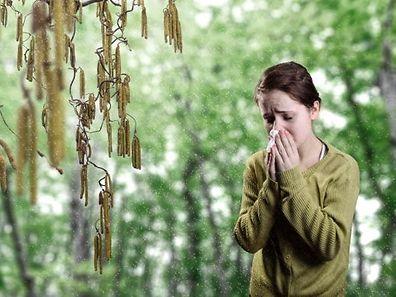 Eine Pollenallergie beschränkt sich in der Regel nicht nur auf eine Pflanzenart.