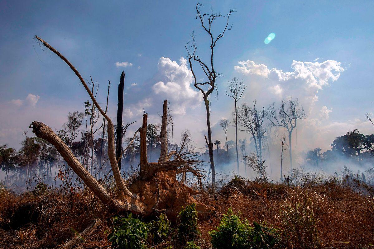Die Brände hinterlassen eine Spur der Verwüstung.